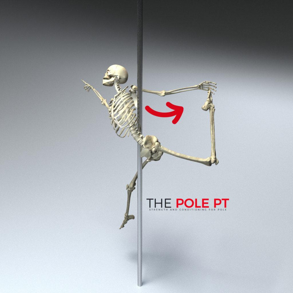 Pole anatomy