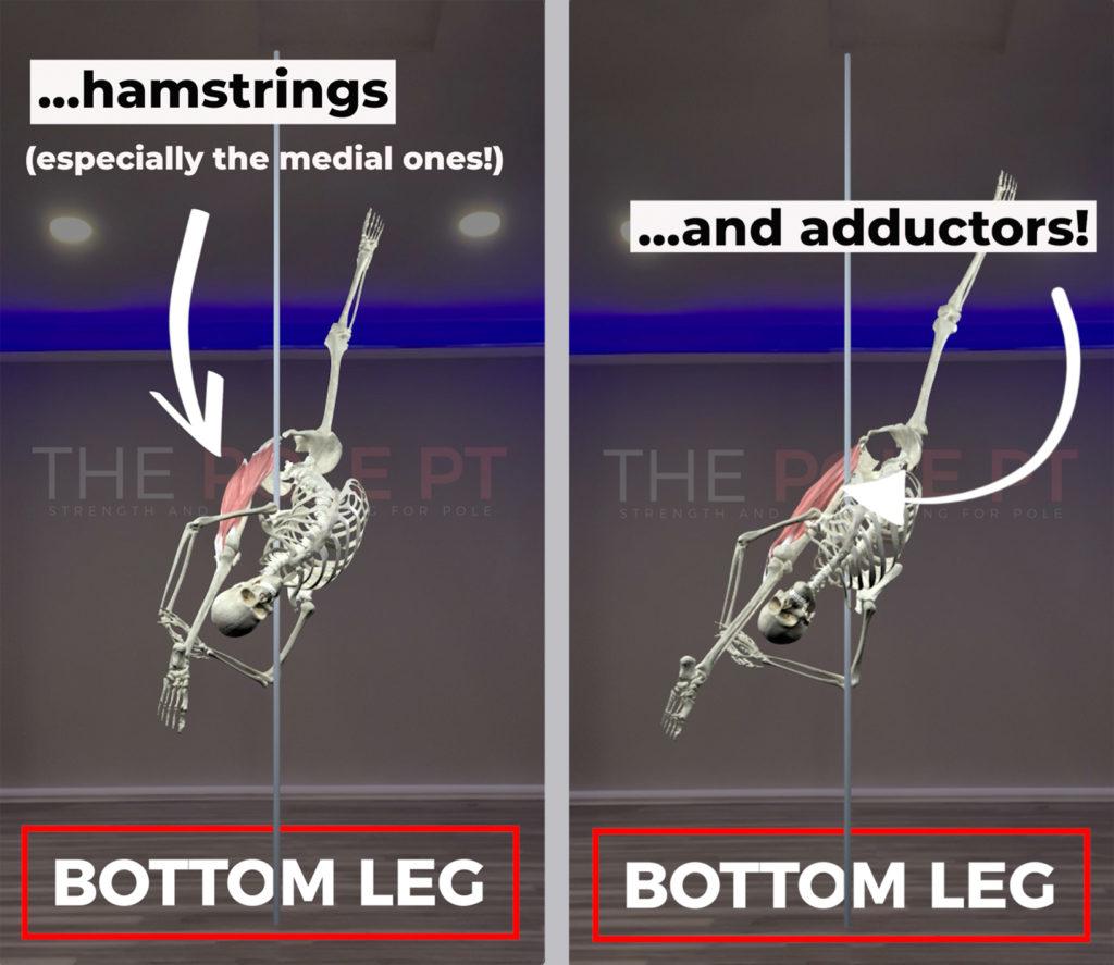 Bird of paradise biomechanics - bottom leg flexibility