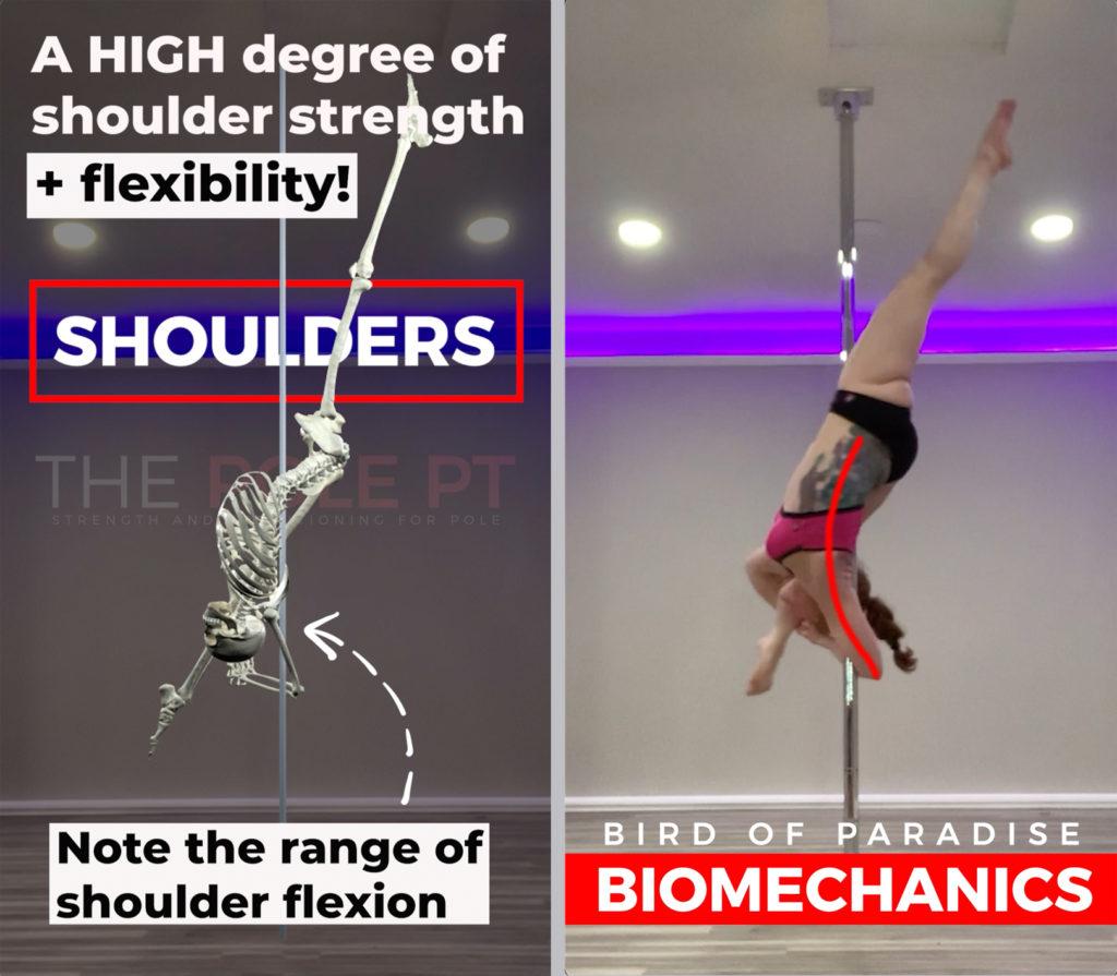 Bird of paradise biomechanics shoulder mobility