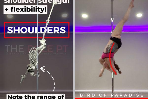 Pole dance anatomy bird of paradise